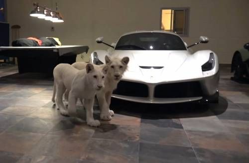 The Ultimate Man Cave - White Lions and Supercars