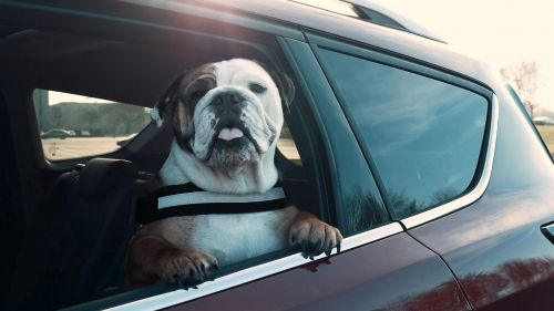 ford-dog-safety-measures